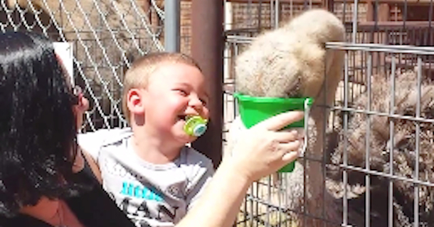 Nothing Makes This Toddler Laugh Like An... Ostrich?